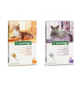 Advantage flea medication for cats